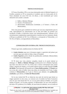 TRONCO ENCEFÁLICO El Tronco Encefálico (TE), es un área