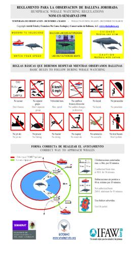 reglame to para la observacio de balle a jorobada humpback whale