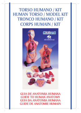 torso humano / kit human torso / model kit tronco