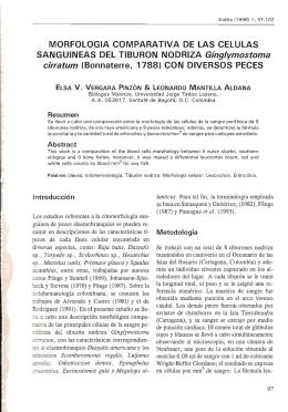 Revista 1, Art.9. Vergara y Mantilla. MORFOLOGIA