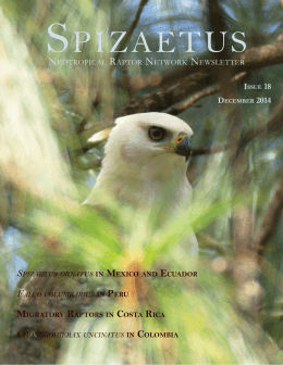 Spizaetus 18 English.indd - Neotropical Raptor Network