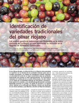 Identificación de variedades tradicionales del olivar riojano