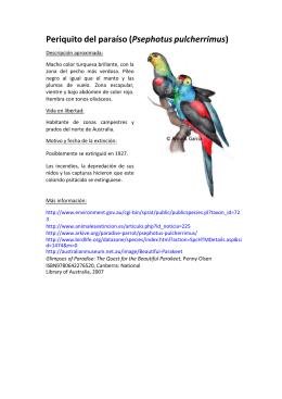 Periquito del paraíso (Psephotus pulcherrimus)