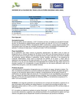 Informe de la Calidad del trigo OI/2005-2006