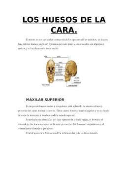LOS HUESOS DE LA CARA.