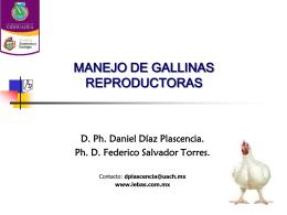 MANEJO DE GALLINAS REPRODUCTORAS