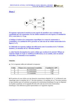 Bloque 2 El esquema representa la meiosis en una