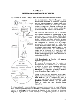 114 CAPÍTULO 11 DIGESTIÓN Y ABSORCIÓN DE NUTRIENTES
