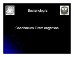 Bacteriología Cocobacilos Gram negativos