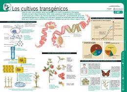 Los cultivos transgénicos