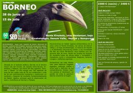 BORNEO - SEO/BirdLife