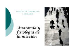 Anatomía y fisiología de la micción
