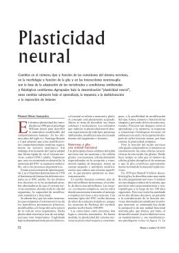 Plasticidad neural