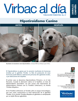 Hipotiroidismo Canino