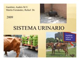 Clase 5 SISTEMA URINARIO