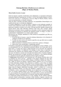 Ginseng siberiano: Eleutherococcus senticosus
