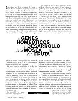 los GENES HOMEÓTICOS y el DESARROLLO de la - E