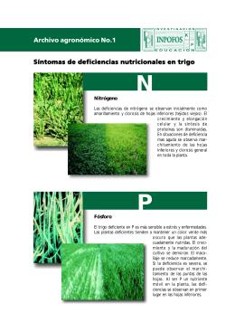 Síntomas de deficiencias nutricionales en trigo