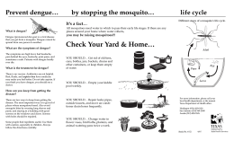 6-52-Dengue brochure - Texas Department of State Health Services