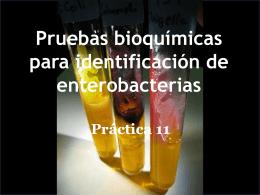Pruebas bioquímicas de identificación de enterobacterias