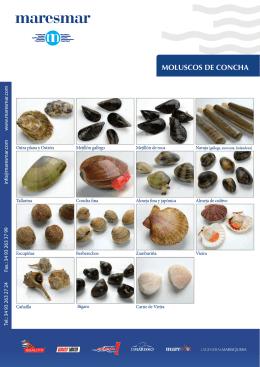 MOLUSCOS DE CONCHA