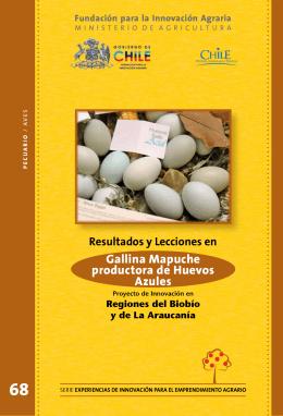 Gallina Mapuche productora de Huevos Azules