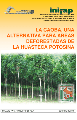 LA CAOBA, UNA ALTERNATIVA PARA AREAS DEFORESTADAS