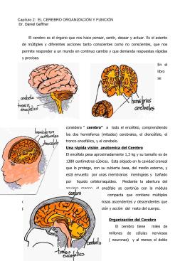 Capítulo 2: EL CEREBRO ORGANIZACIÓN Y FUNCIÓN Dr. Daniel