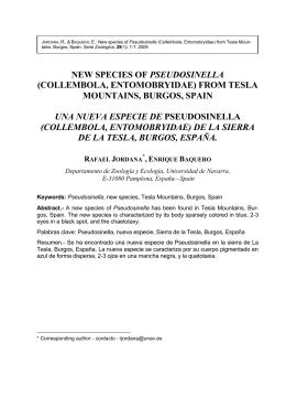 NEW SPECIES OF PSEUDOSINELLA (COLLEMBOLA