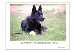 pdf el pastor aleman negro puro