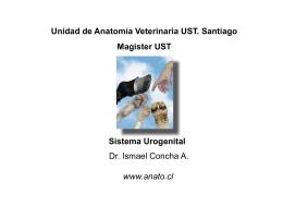 Sistema Urogenital Unidad de Anatomía Veterinaria UST