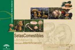 Setas comestibles de Andalucía
