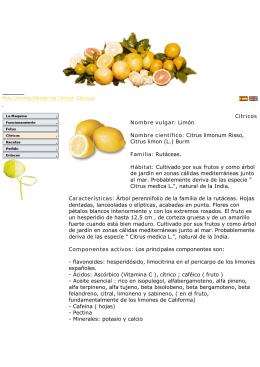Citricos Nombre vulgar: Limón Nombre científico: Citrus limonum