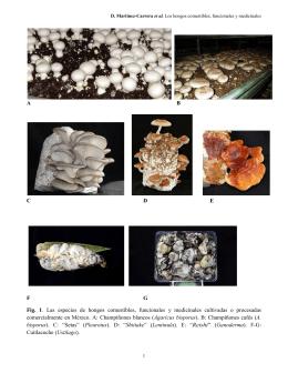 ABCDEFG Fig. 1. Las especies de hongos comestibles, funcionales