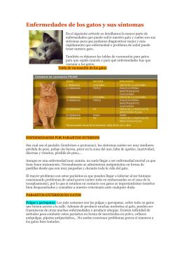 Enfermedades de los gatos y sus síntomas