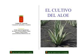 EL CULTIVO DEL ALOE - Cabildo de Lanzarote