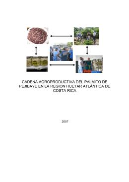 Palmito de pejibaye - Ministerio de Agricultura y Ganadería