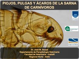 Piojos, pulgas y acaros de la sarna en carnívoros