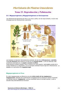 Tema 23 - Hipertextos del Área de la Biología