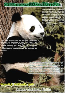 reportaje sobre el oso panda