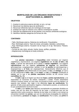 Morfología de tallo y raíz - Facultad de Ciencias-UCV
