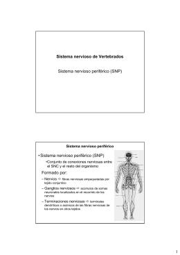 Sistema Nervioso-III