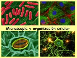 Microscopía y organización celular