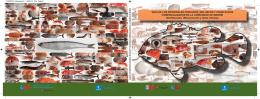 Guía de los principales pescados, moluscos y crustáceos