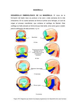 mandíbula - Dr. Enrique Martinez Martinez