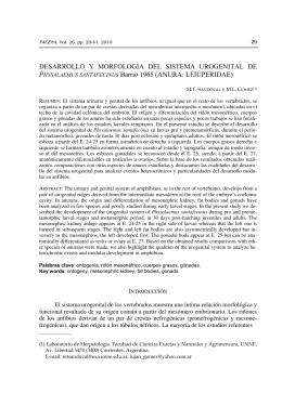 DESARROLLO Y MORFOLOGIA DEL SISTEMA UROGENITAL DE