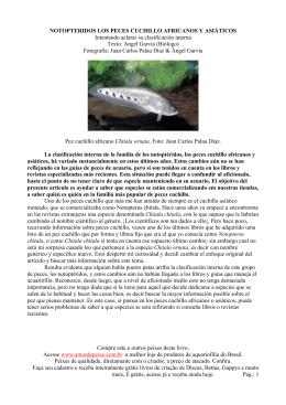 NOTOPTERIDOS LOS PECES CUCHILLO