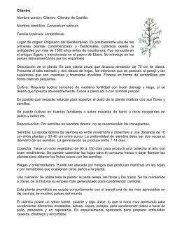 Cilantro Nombre común: Cilantro, Cilantro de Castilla