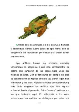 Anfibios - Ayuntamiento de Valverde del Camino