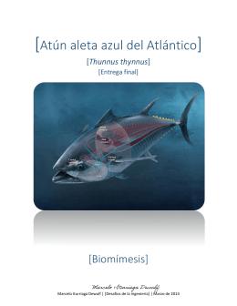 [Atún aleta azul del Atlántico]